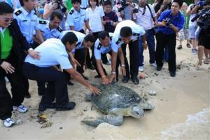 phuket-The-largest-turtle-found-in-Phuket-waters-in-more-than-10-years-is-released-into-the-Andaman-Sea-last-Saturday-1-FsqlRWY