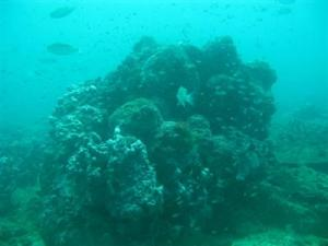 phuket-A-pinnacle-at-the-newly-discovered-reef-which-some-have-suggested-be-dubbed-E-taen-Photo-courtesy-MCRCD-1-qwvVSFQ