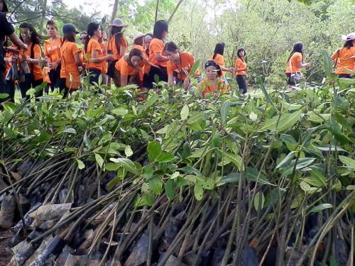phuketnews_Volunteers_picking_up_the_mangrove_saplings_Photo_Saran_Mitrarat_21677_dRxHNmZRGZ_jpeg